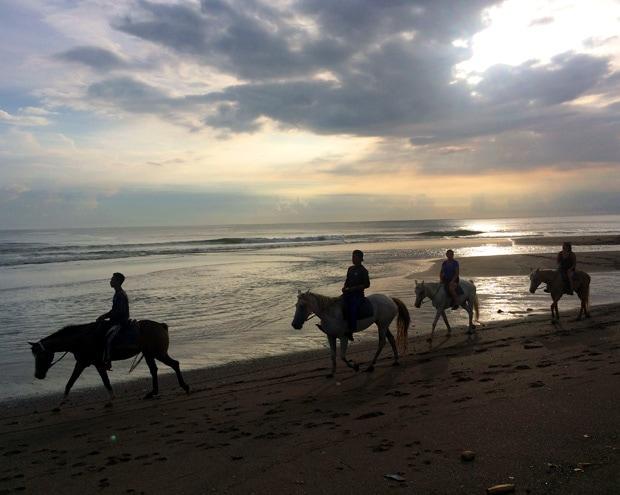 Horses on the beach Canggu Bali