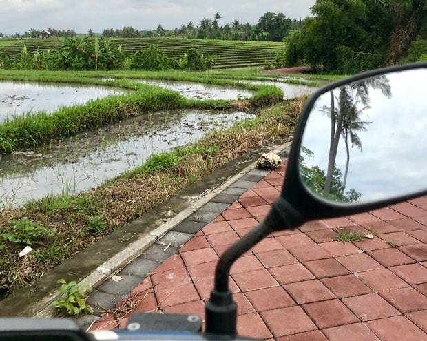 b3f204d03e56 The Ultimate Travel Guide To Canggu, Bali - Breathing Travel