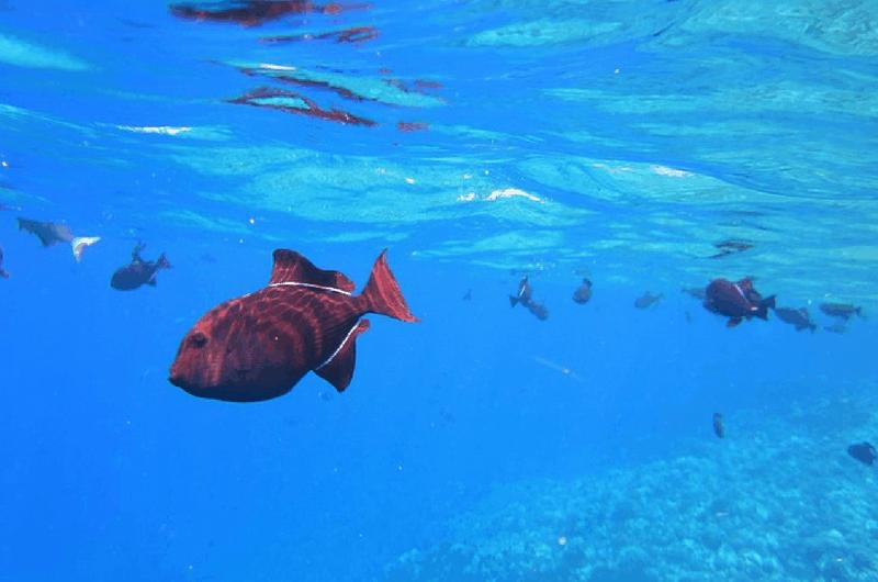 snorkelling in Sydney Australia